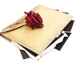 Blank old photos in album and dried flower, isolated on white — ストック写真