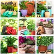 Collage of gardening, closeup — Stock Photo
