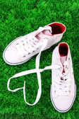 Beautiful gumshoes on green grass background — Stock Photo