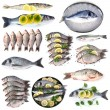 Fresh fish and fish dishes isolated on white — Stock Photo