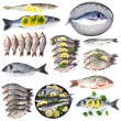 Fresh fish and fish dishes isolated on white — Stock Photo #41232243