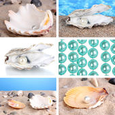 Collage of seashells close-up — Stock fotografie