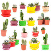 Collage of funny cacti, isolated on white — Stock Photo
