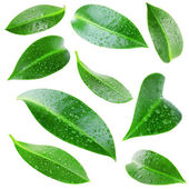 Collage of beautiful green leaves isolated on white — Stock Photo