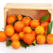 Ripe tasty tangerines with leaves in wooden box dropped isolated on white — Stock Photo #41338519