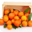 Ripe tasty tangerines with leaves in wooden box dropped isolated on white — Stock Photo