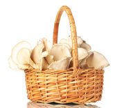 Oyster mushrooms in basket isolated on white — Stock Photo