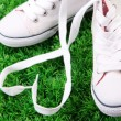 Beautiful gumshoes on green grass background — Stock Photo #41343745