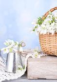 Beautiful snowdrops in wicker basket, on blue background — Stockfoto