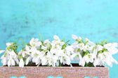 Beautiful snowdrops on blue background — Stock Photo