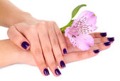 Beautiful woman hands with flower isolated on white — ストック写真