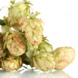 Stock Photo: Beautiful green hop isolated on white