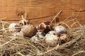 Quail eggs in a nest on wooden background — Stock fotografie