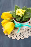 Yellow primrose in pot and tulips on napkin on wooden background — Foto de Stock