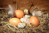 Chicken and quail eggs in a nest on wooden background — Stock Photo