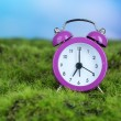 Foto Stock: Purple alarm clock on grass on natural background
