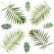 Collage of beautiful palm leaves isolated on white — Stockfoto