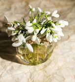Beautiful bouquet of snowdrops in vase on old paper background — Stok fotoğraf