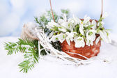 Beautiful bouquet of snowdrops in wicker basket on snow — Foto de Stock