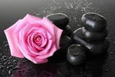 Spa stones with drops and pink rose on grey background — Stock Photo