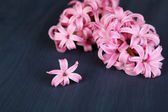 Pink hyacinth on wooden background — Stock Photo