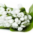 Постер, плакат: Beautiful bouquet of snowdrops isolated on white
