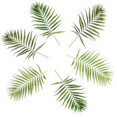 Collage of beautiful palm leaves isolated on white — Stock Photo