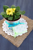 Yellow primrose in pot on napkin on wooden background — Stock Photo