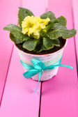 Yellow primrose in pot on  wooden background — Stock Photo