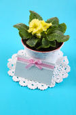 Yellow primrose in pot on color napkin on wooden background — Stock Photo