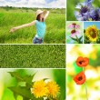 Collage of summer time — Stock Photo #42754553