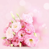 Bouquet of eustoma flowers on bright background — Stock Photo