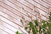 Beautiful pussy-willow twigs on wooden background — Stock Photo