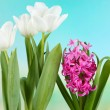 Beautiful tulips and hyacinth flower on bright background — Stock Photo