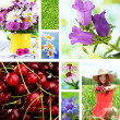 Collage of summer time — Stock Photo #42767103