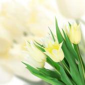 Beautiful white tulips on bright background — Stock Photo