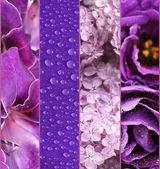 Kolaż zdjęć w kolorach fioletowym — Zdjęcie stockowe