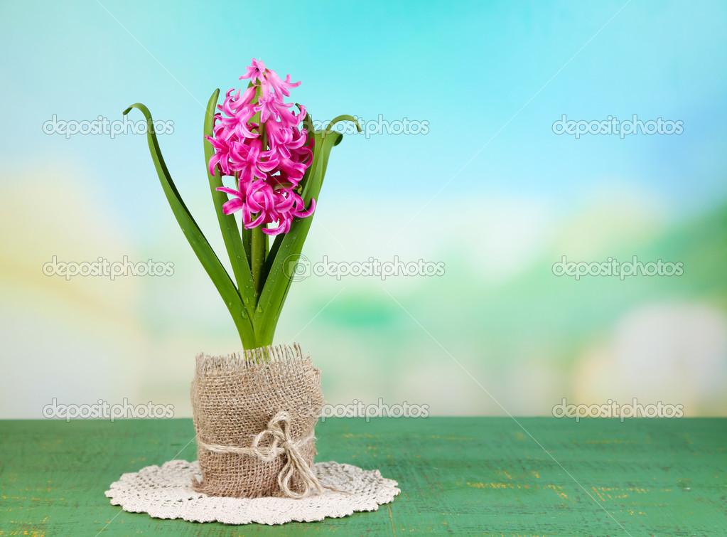 belle rose fleur jacinthe en pot sur la table en bois de. Black Bedroom Furniture Sets. Home Design Ideas