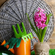 Composition with garden equipment and beautiful pink hyacinth flower in pot, on green grass, on wooden background — Stock Photo #42845391