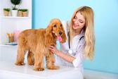 Beautiful young female veterinarian examining dog in clinic — Stock Photo