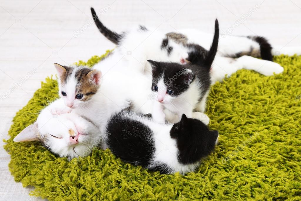 mother cat and kittens cute