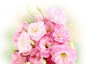 Bouquet of eustoma flowers on bright background — Stockfoto