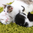 Cute mother cat and little kittens — Stock Photo #43072387
