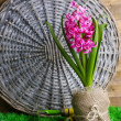 Composition with garden equipment and beautiful pink hyacinth flower in pot, on green grass, on wooden background — Stock Photo #43072709