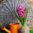 Composition with garden equipment and beautiful pink hyacinth flower in pot, on green grass, on wooden background — Stock Photo #43072713