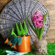 Composition with garden equipment and beautiful pink hyacinth flower in pot, on green grass, on wooden background — Stock Photo