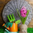 Composition with garden equipment and beautiful pink hyacinth flower in pot, on green grass, on wooden background — Stock Photo #43072723