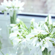 Постер, плакат: Beautiful bouquets of snowdrops in vases on windowsill