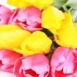 Pink and yellow tulips close-up — Stock Photo #43075403