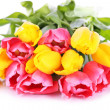 Pink and yellow tulips isolated on white — Stock Photo #43075415